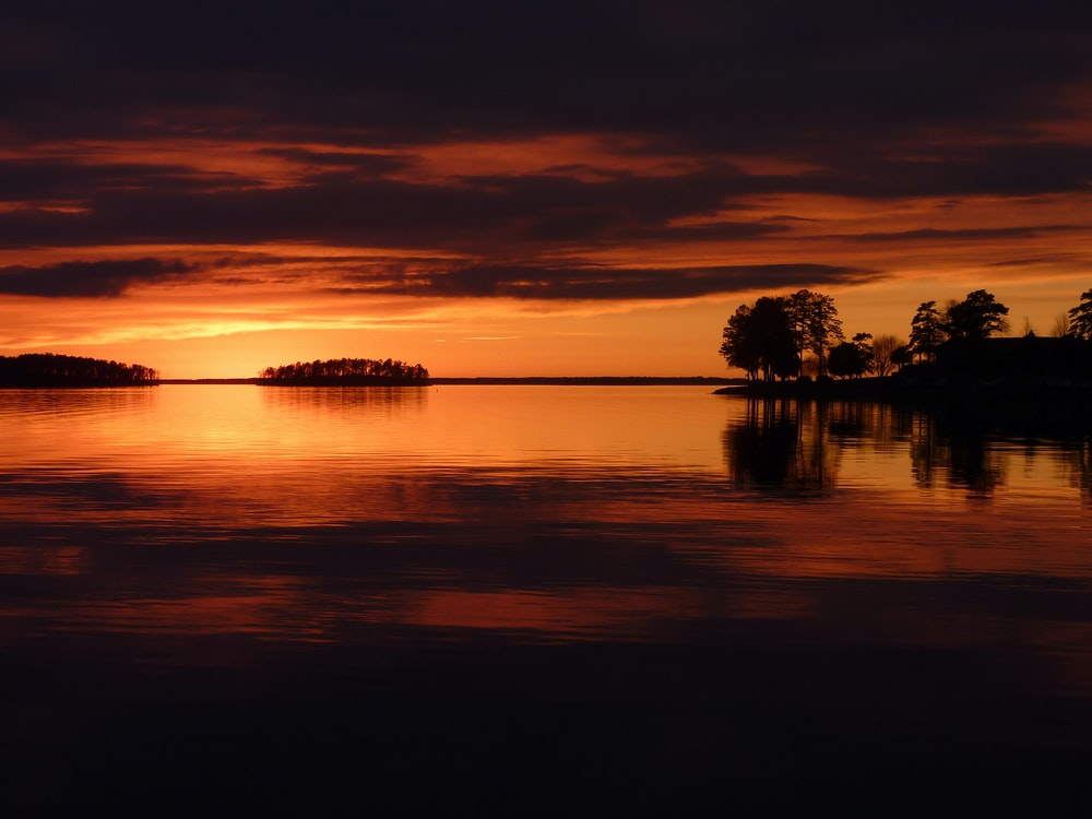 silhouette of trees near body of water during golden hour