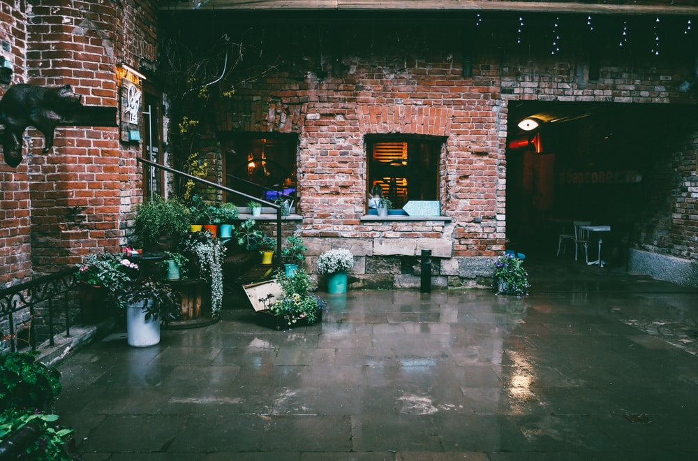 potted plants and vines outside brick house