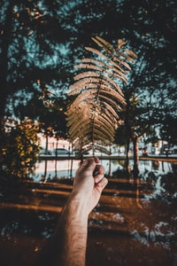 person holding a brown leaf