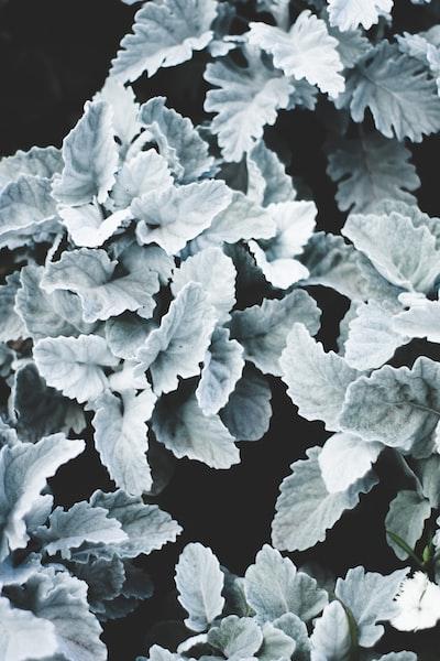 1652. Növények világa