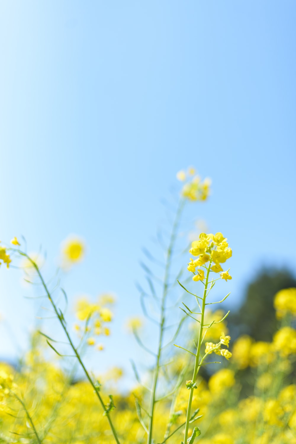 selective focus photography of yellow petaled flower at daytime