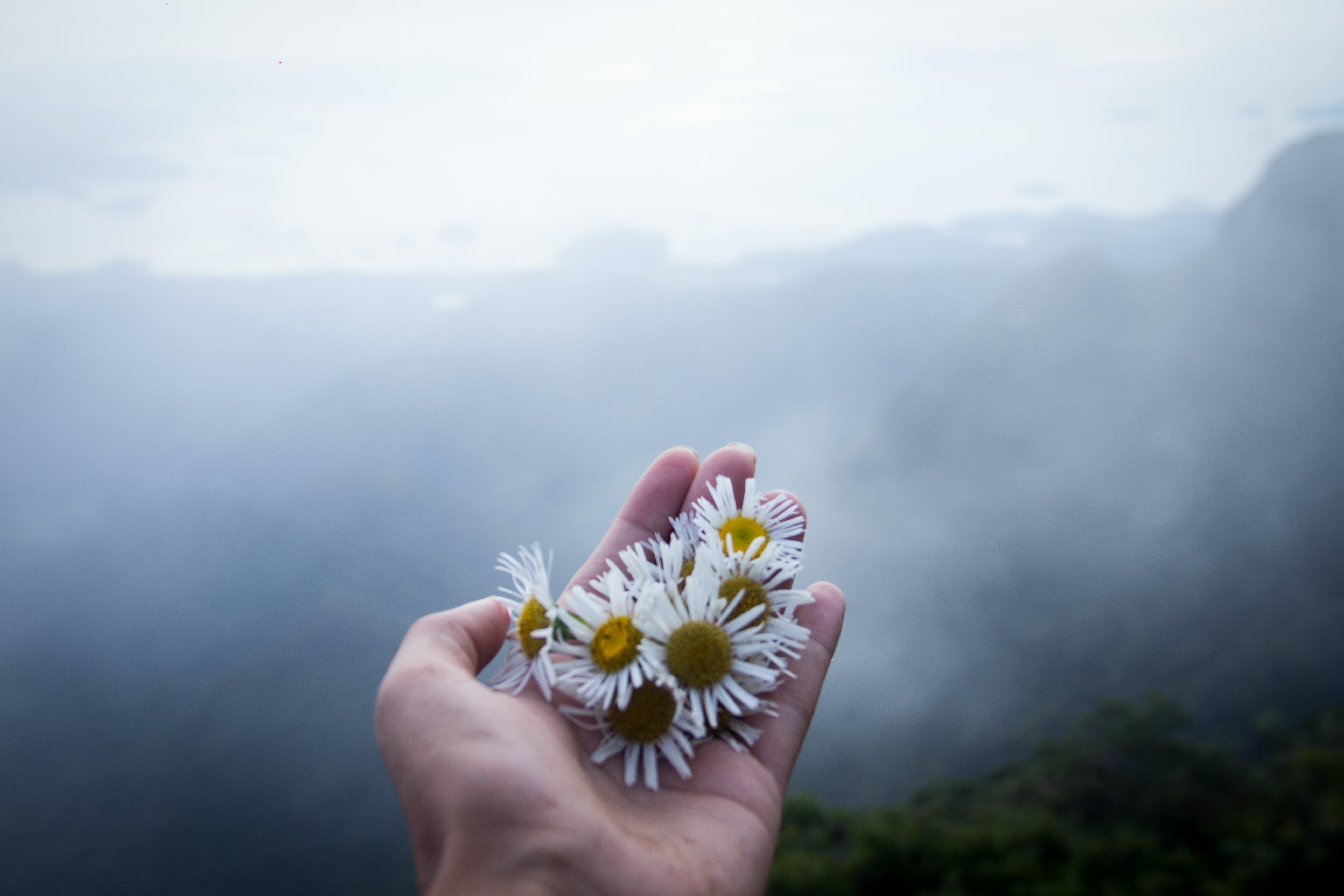 person holding daisies on top of mountain