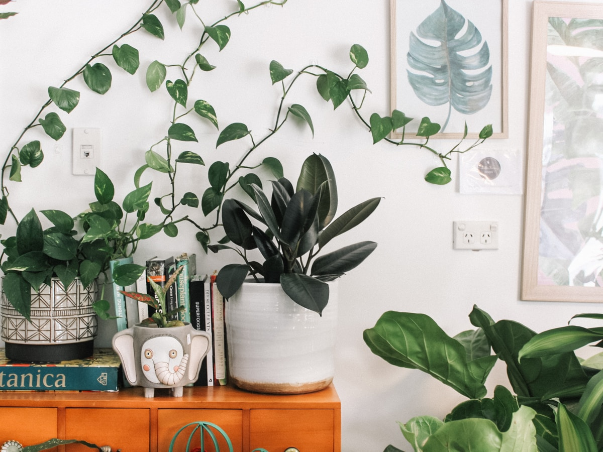 partes de las plantas, green leafed plant