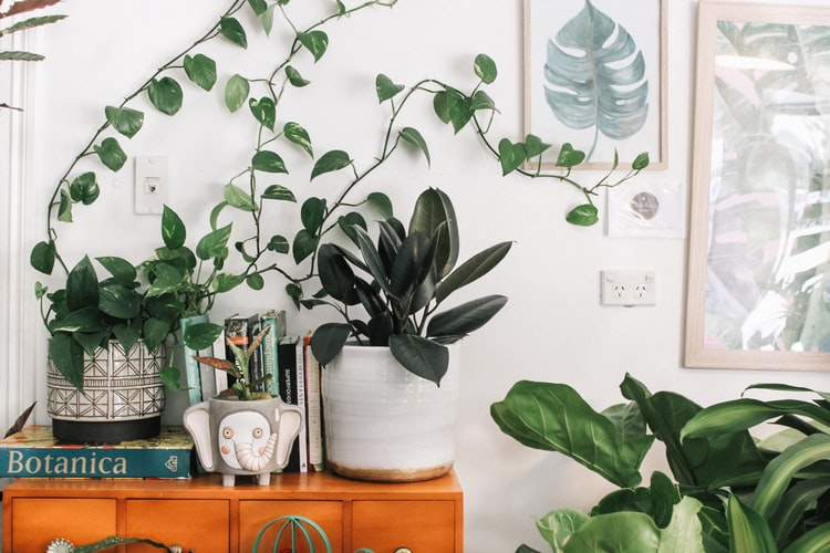 A few potted plants displayed in the home