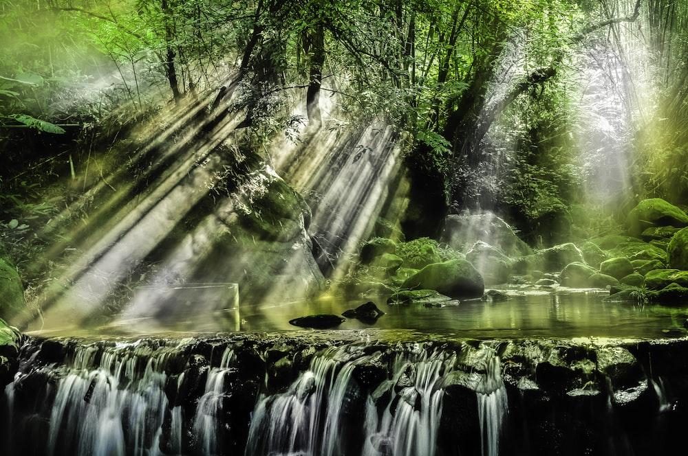 sunlight reflection on river under green tree