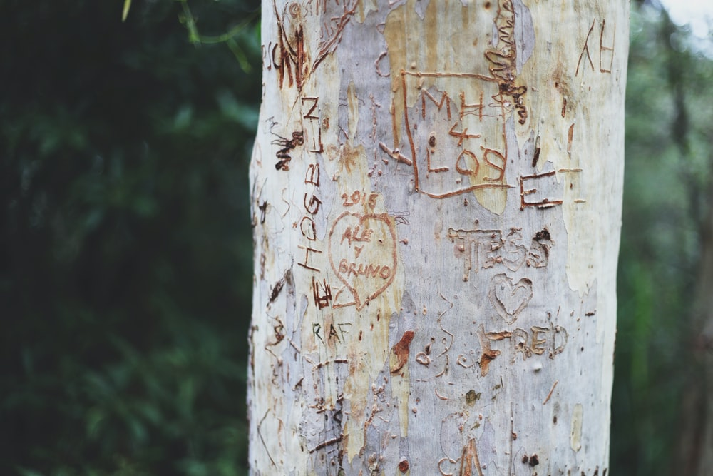 close view of tree bark with carvings