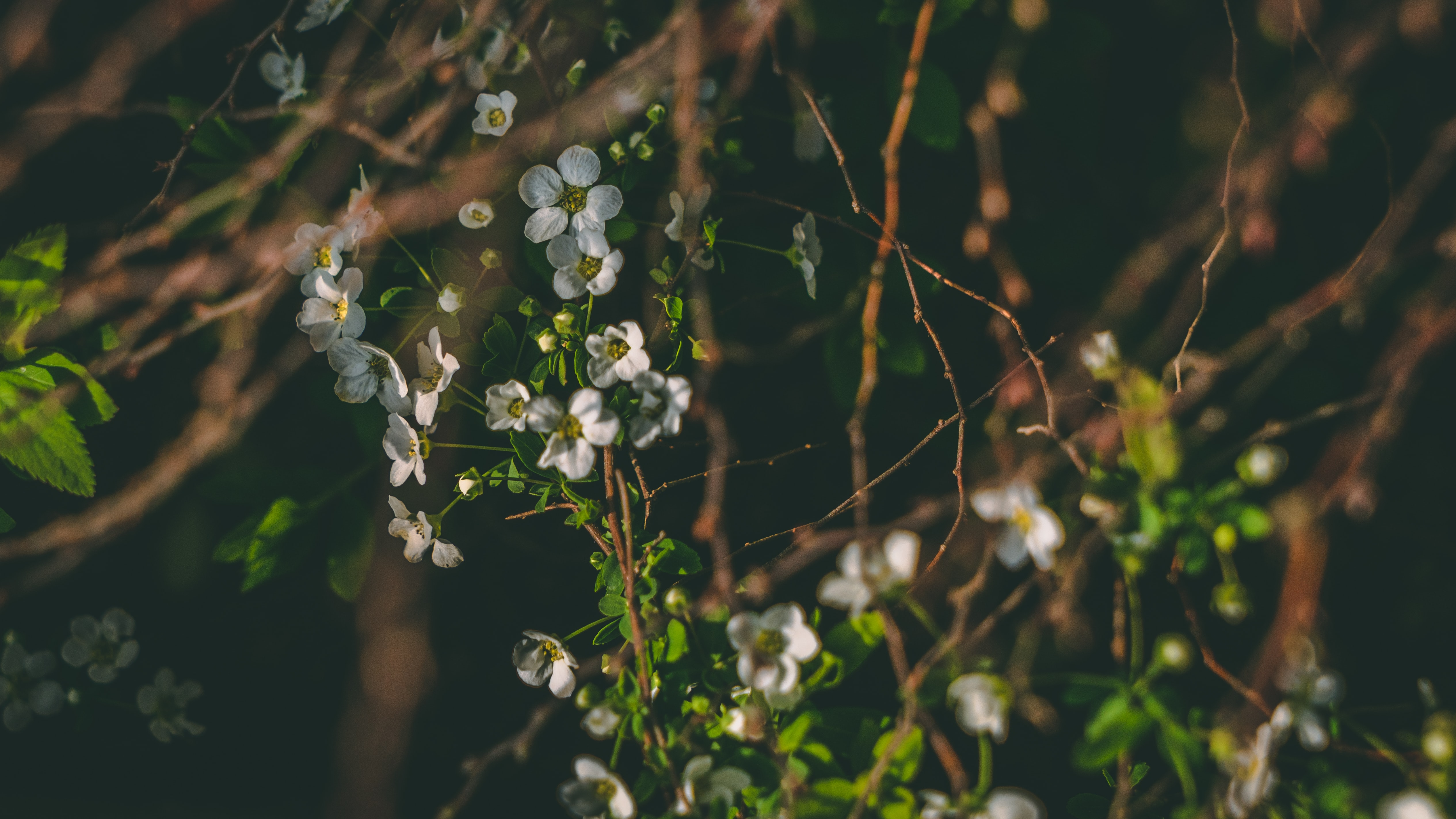 white petaled flower in focus photography