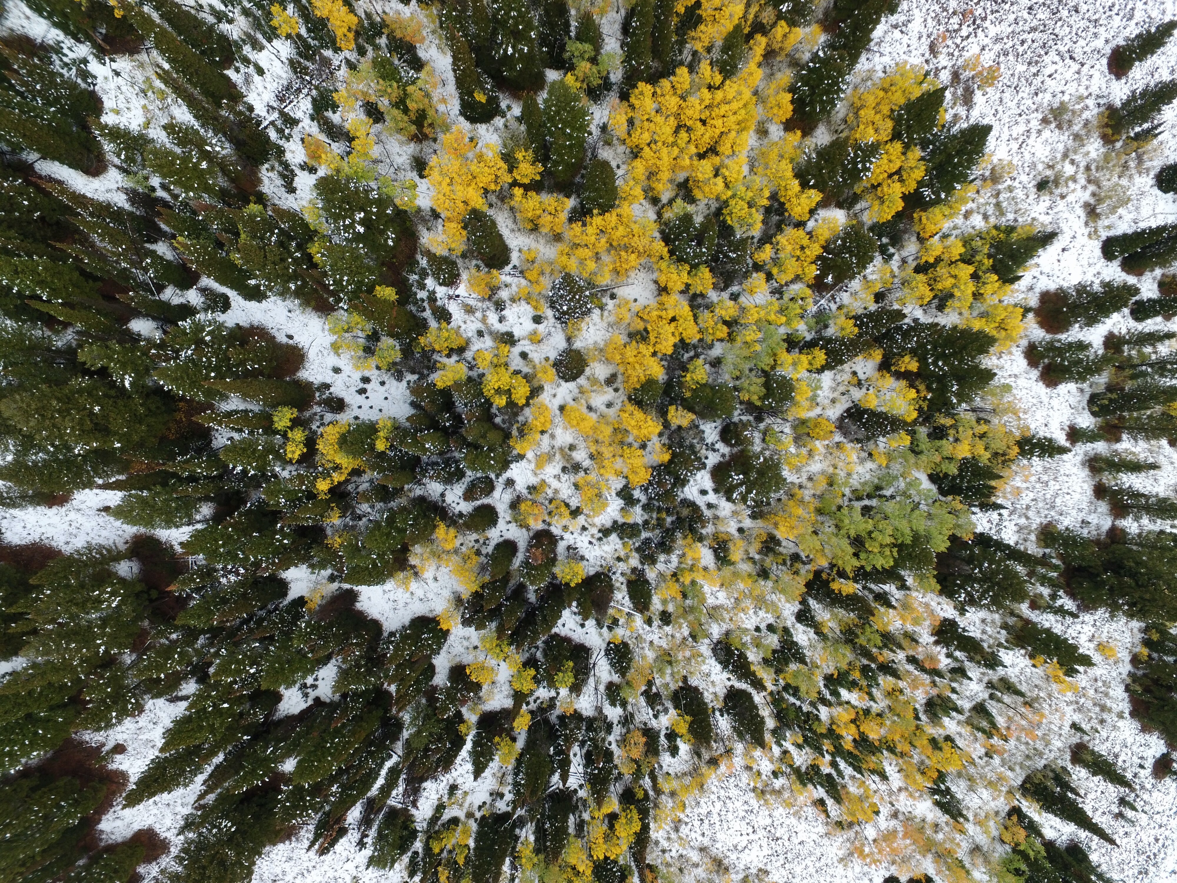 bird's eye view photography of tall green and yellow leafed trees