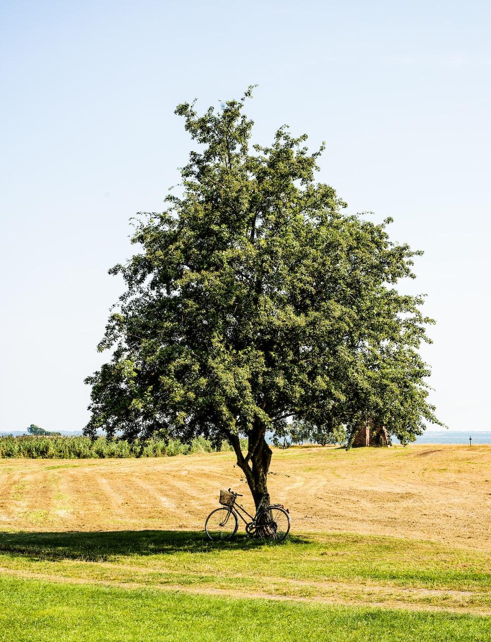 bicycle park beside tree