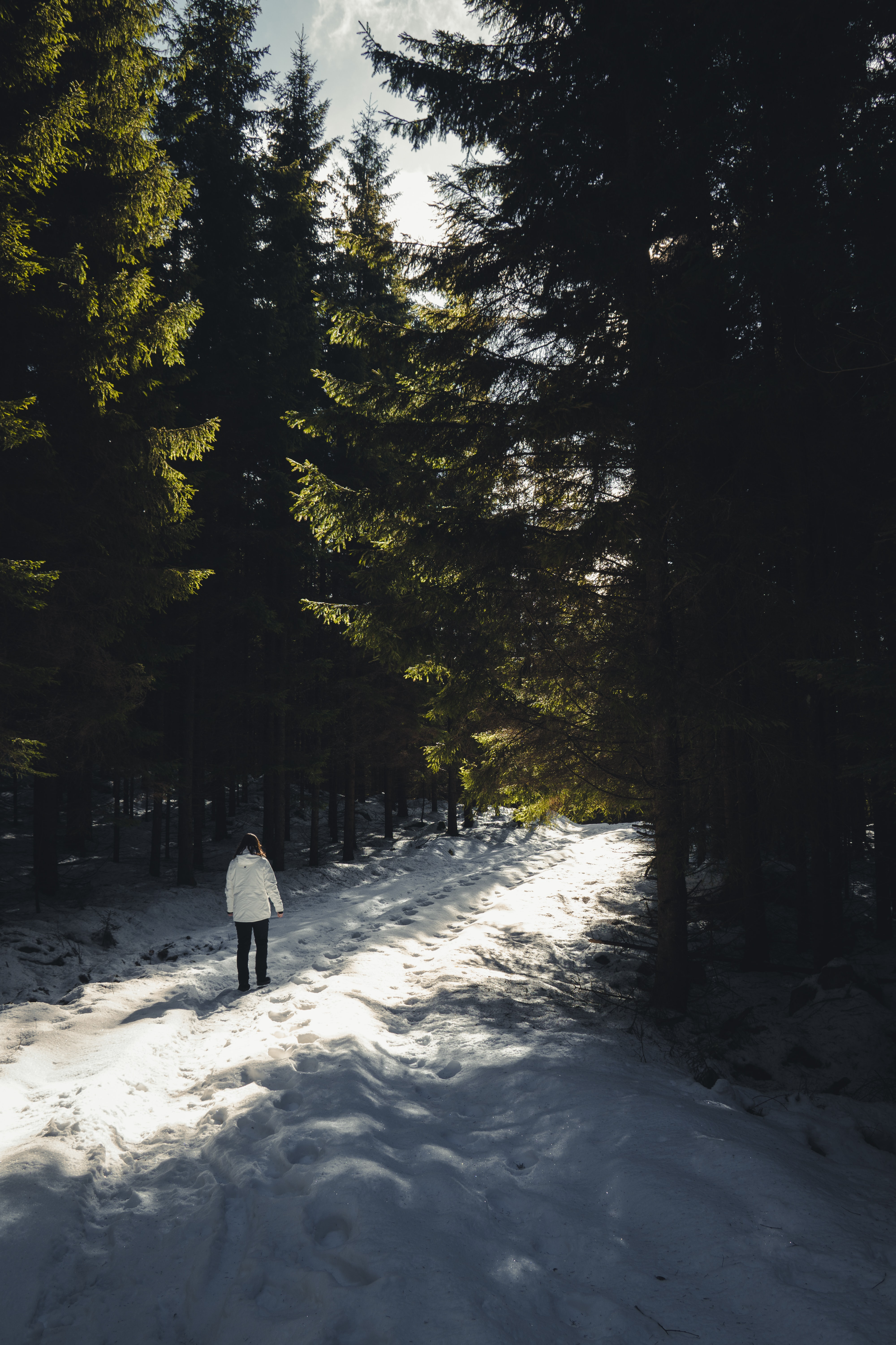 person walking on snow covered ground between green trees
