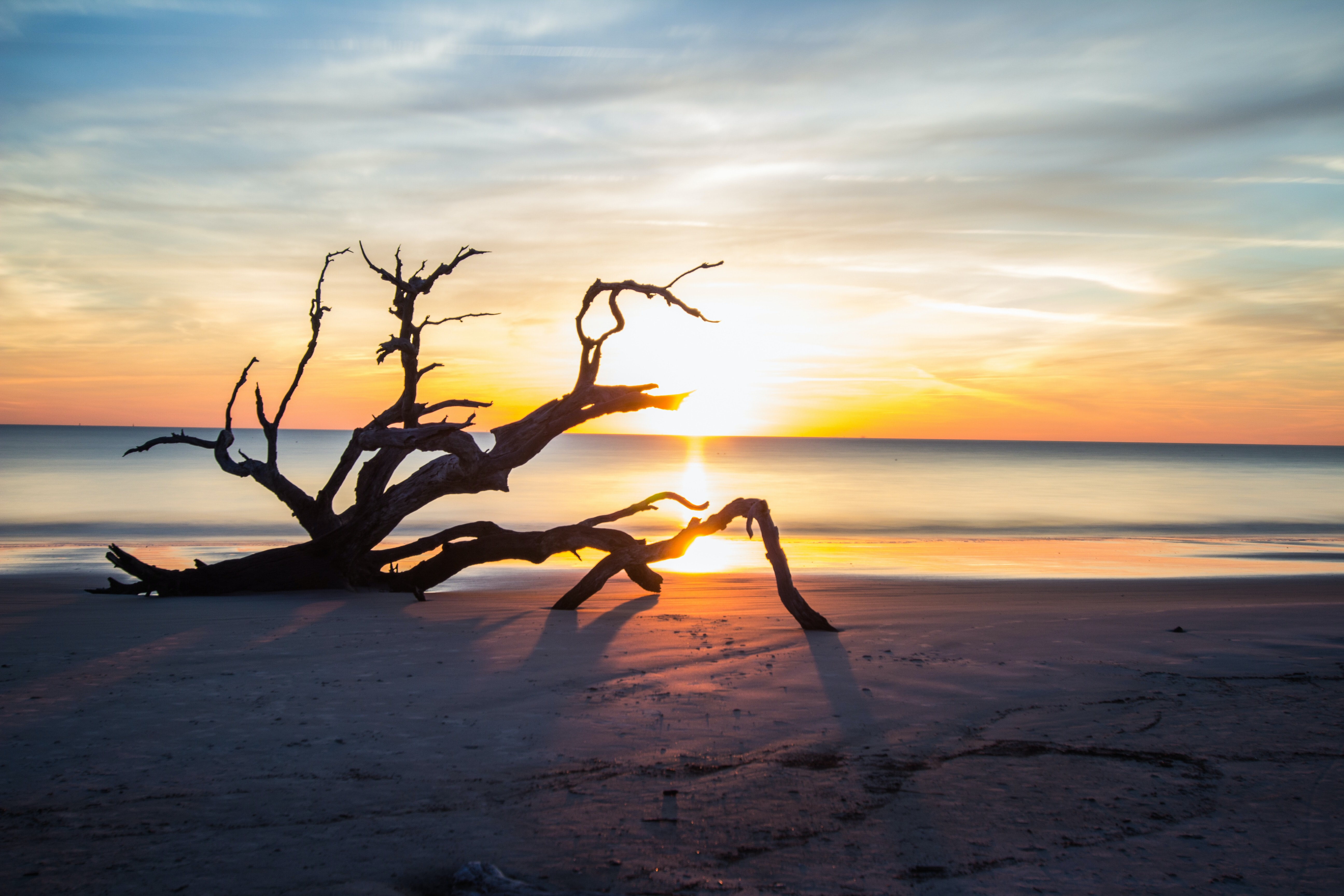 silhouette photography of driftwood on seashore