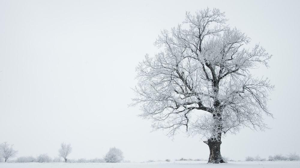 tree on snowy weather