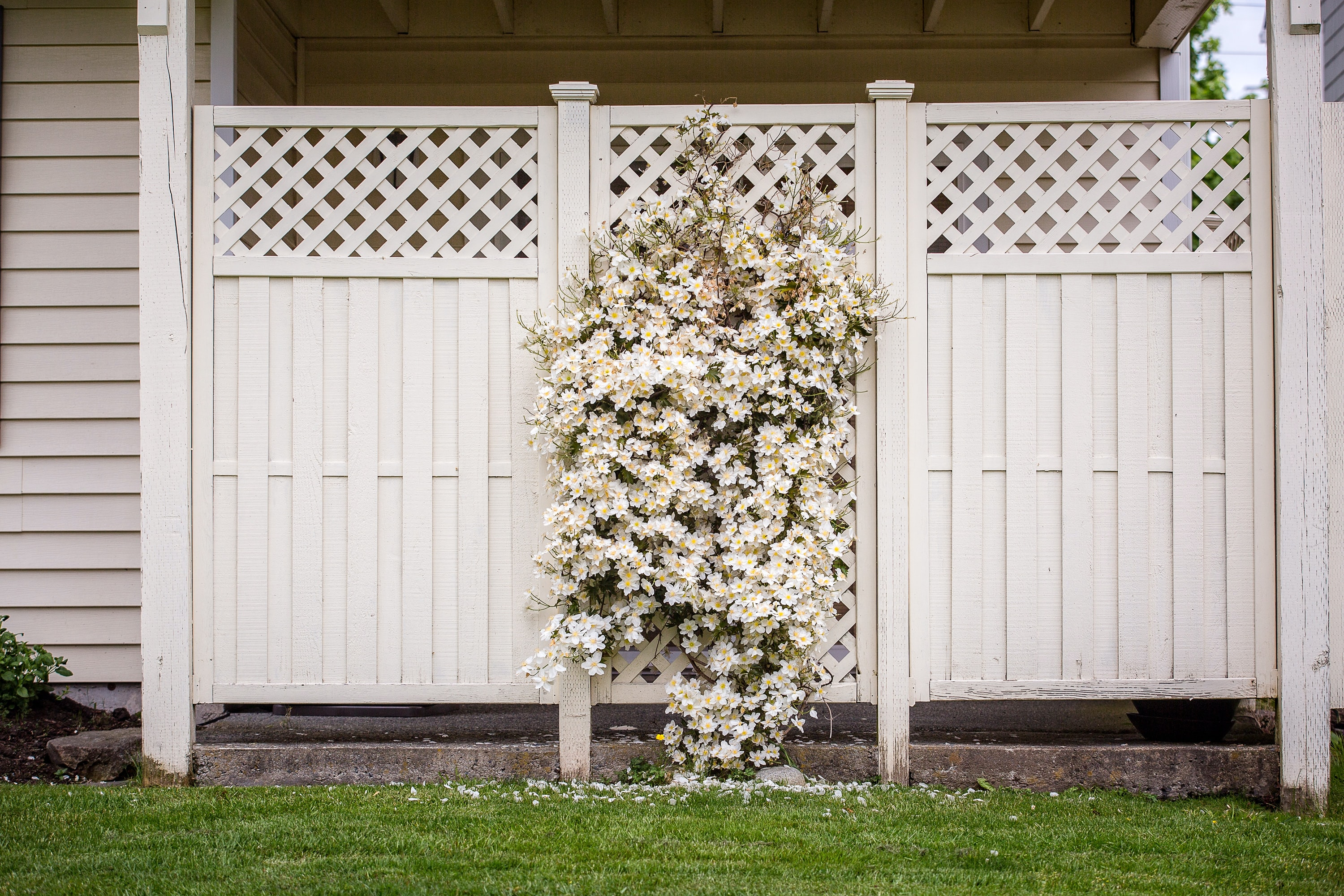 white petaled flowers mountain on wooden fence