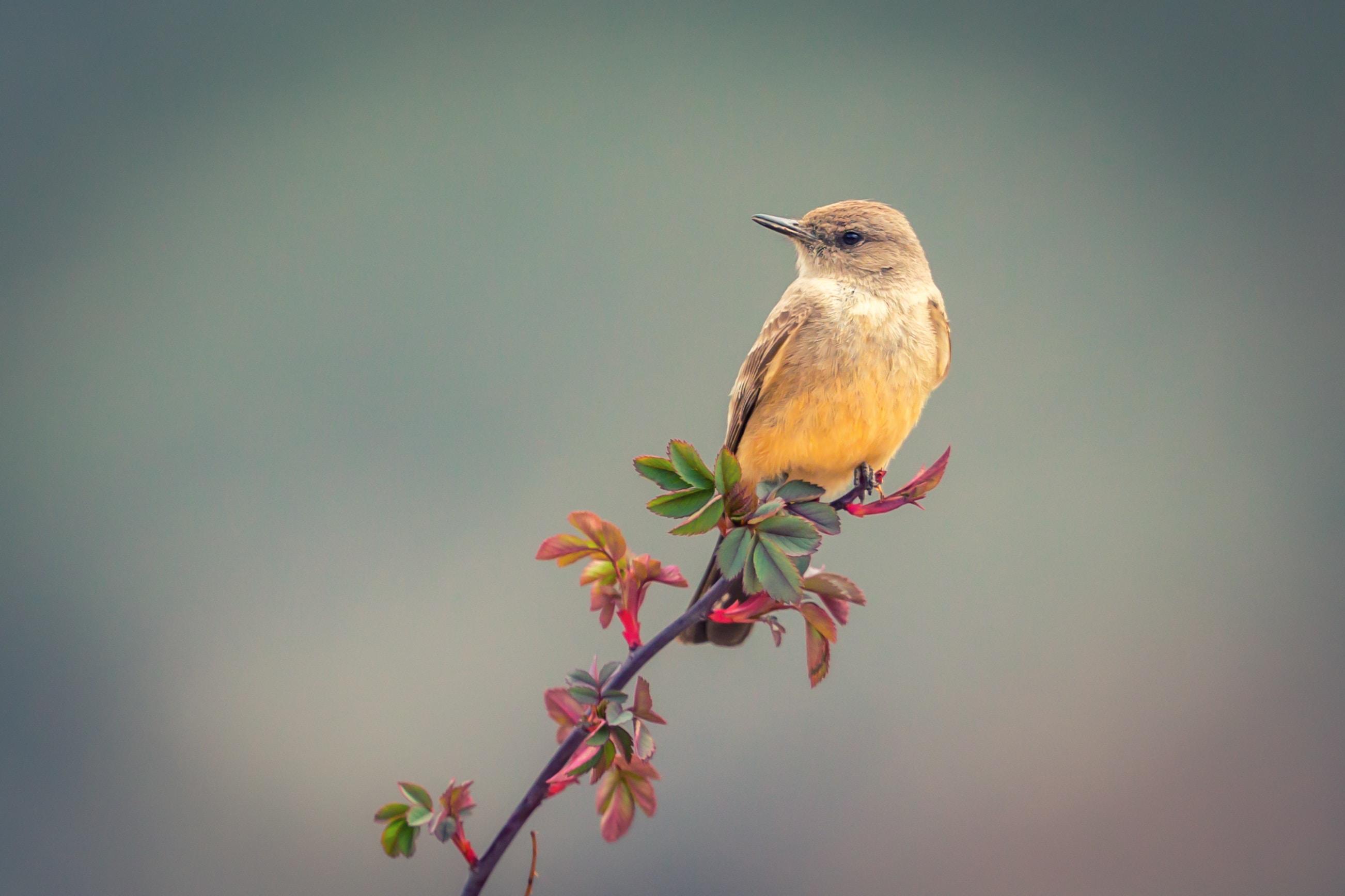 yellow short-beaked bird