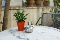 green leafed in brown pot on grey table