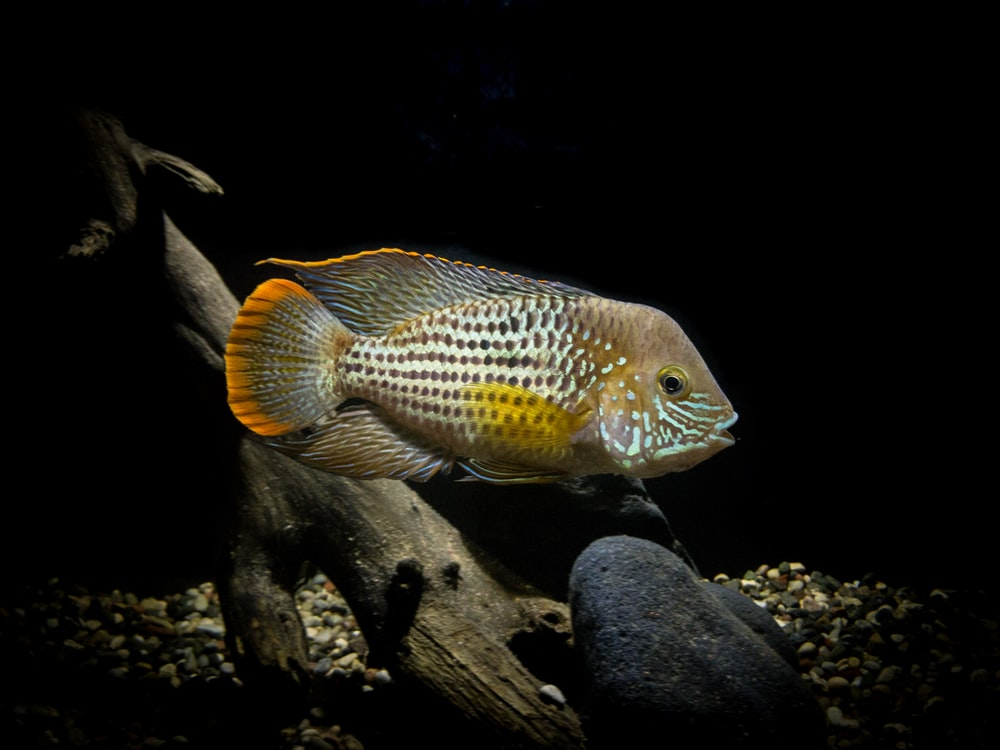 underwater photography of brown and white fish
