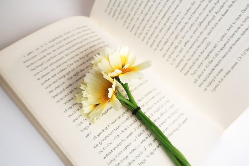 white-and-yellow flower on white open book