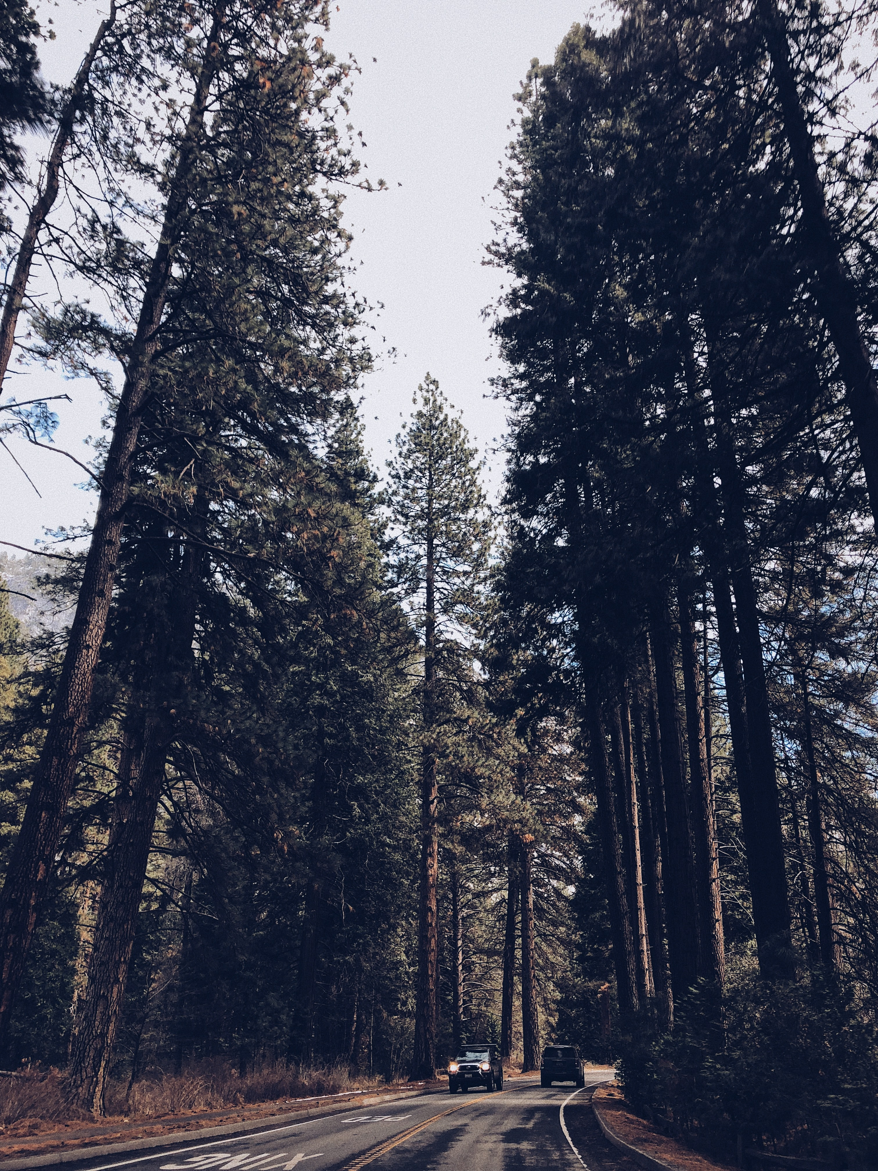 forest wallpaper [free download!] 100 best free wallpaper, forest34