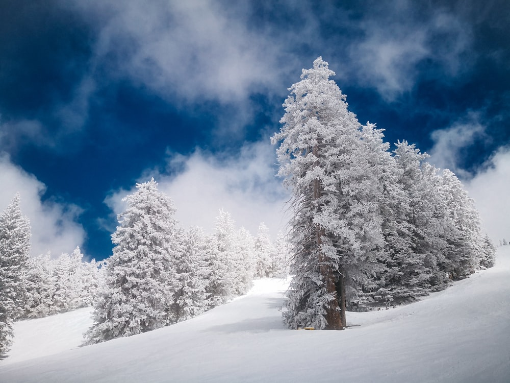 landscape photography of tree coated by snow under blue sky