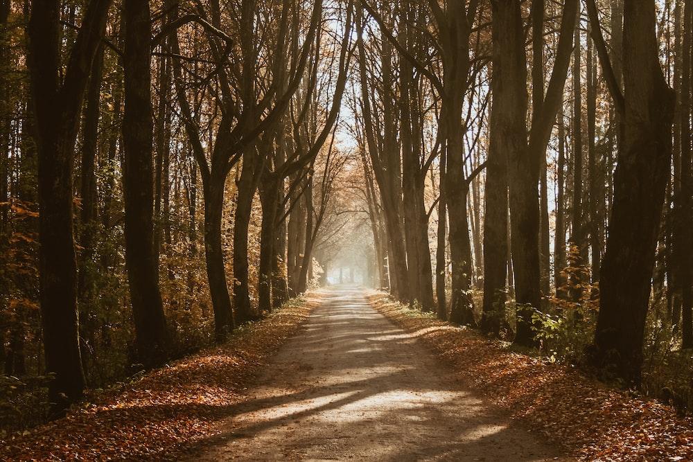 alley road in between trees