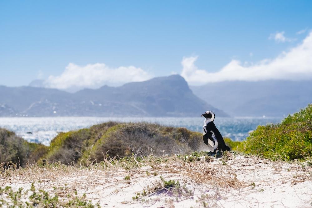 black and white bird across the island