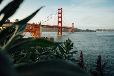 golden gate bridge, california san francisco zoom background