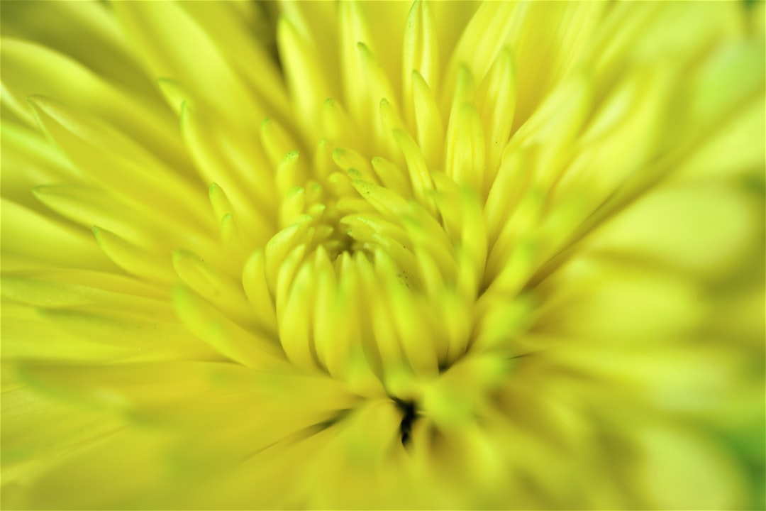 Like sunshine in a flower. A happy and colorful yellow spring bloom to take away the winter blues.
