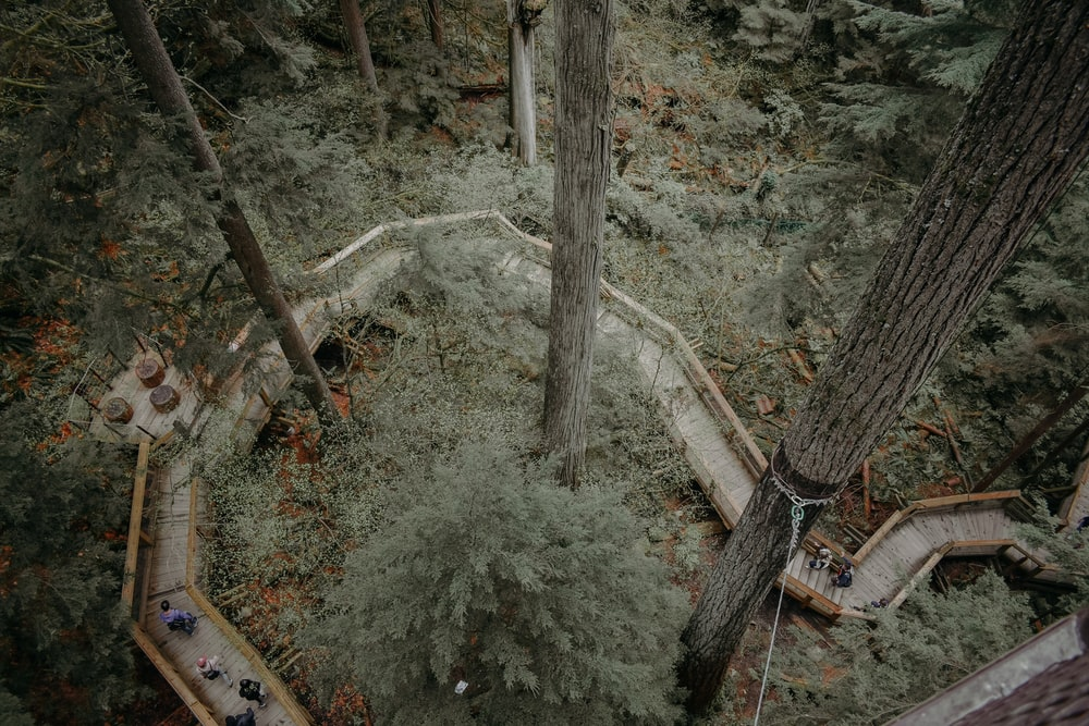 aerial photography of wooden pathway running across trees