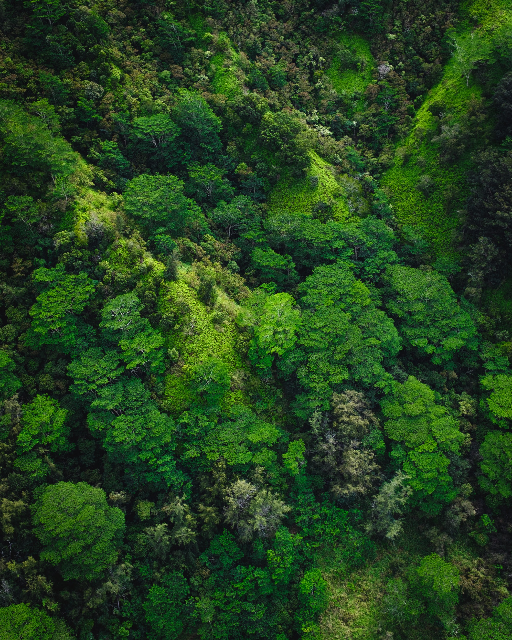 aerial photography of trees on mountain