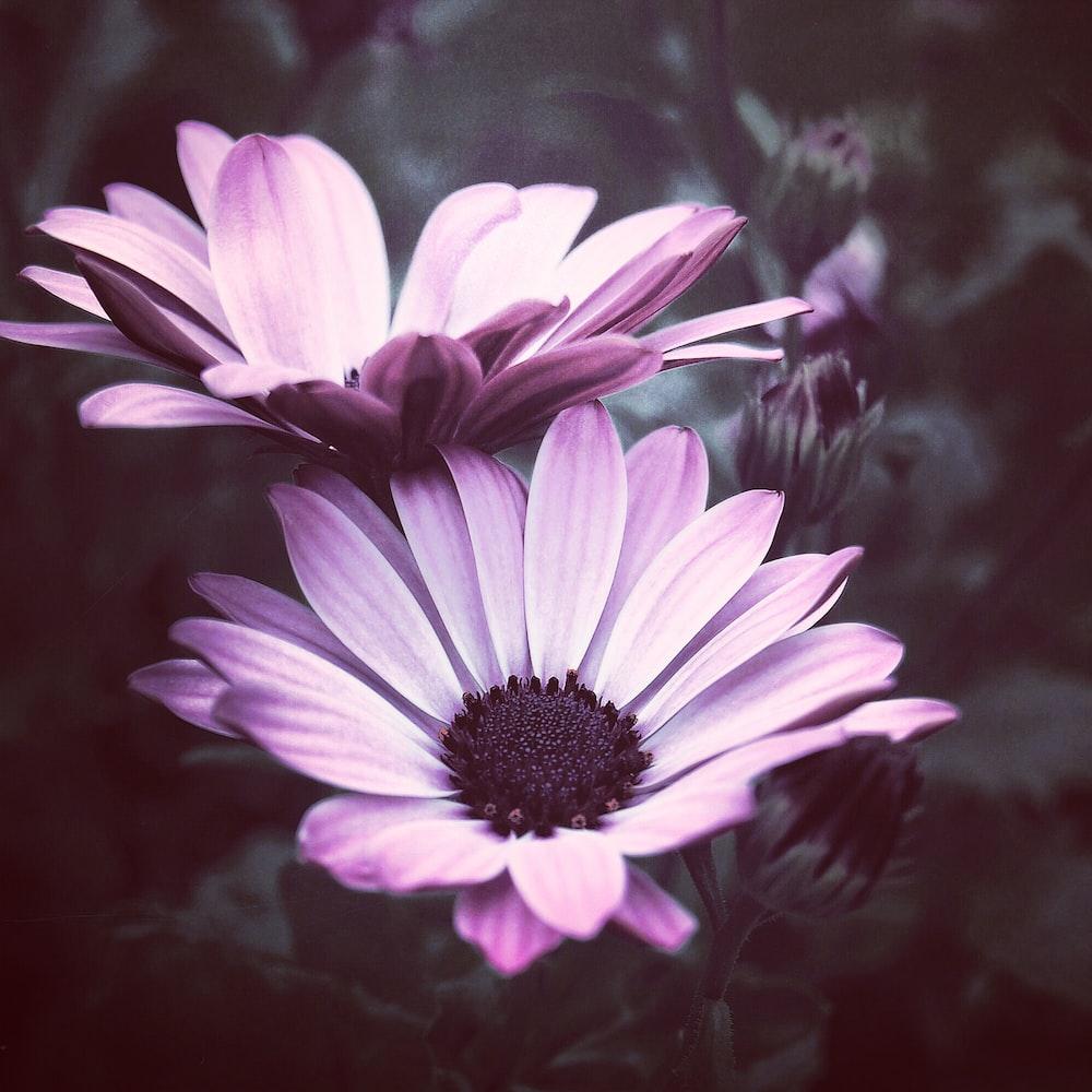 Purple flower pictures download free images on unsplash closeup photo of purple petaled flowers mightylinksfo