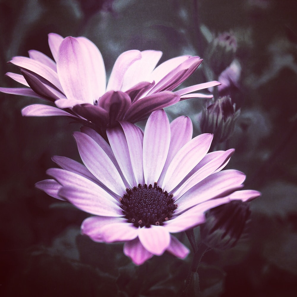 Purple Flower Pictures Download Free Images On Unsplash