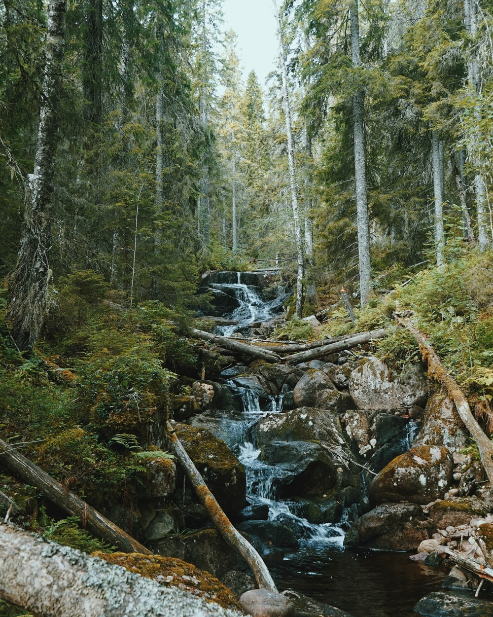 river flowing with rocks surrounded by trees