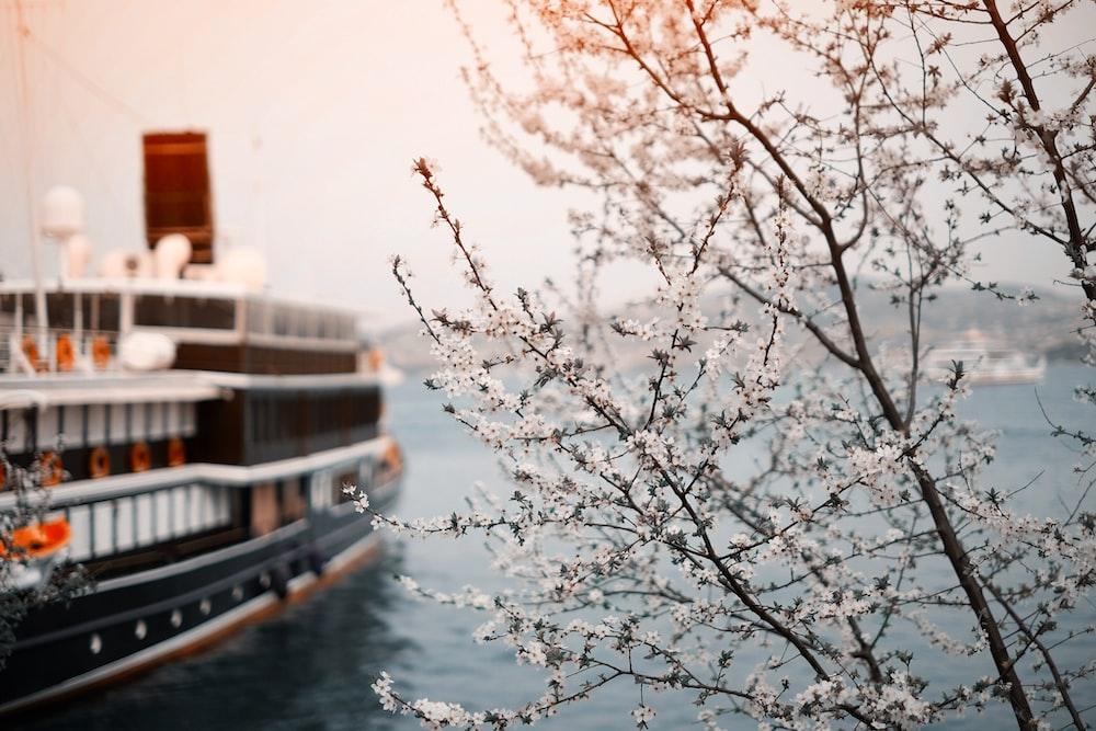 black and white ferry cruising on ocean