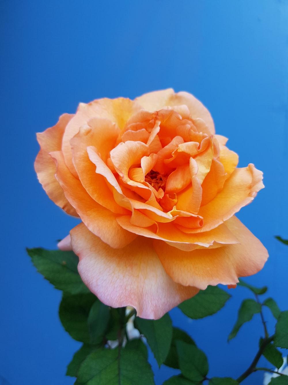 closeup of orange petaled flower