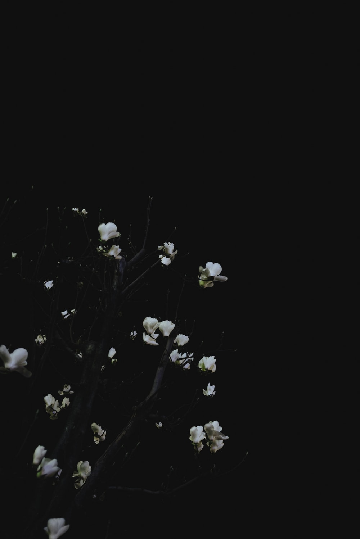 closeup photo of white leaf plant