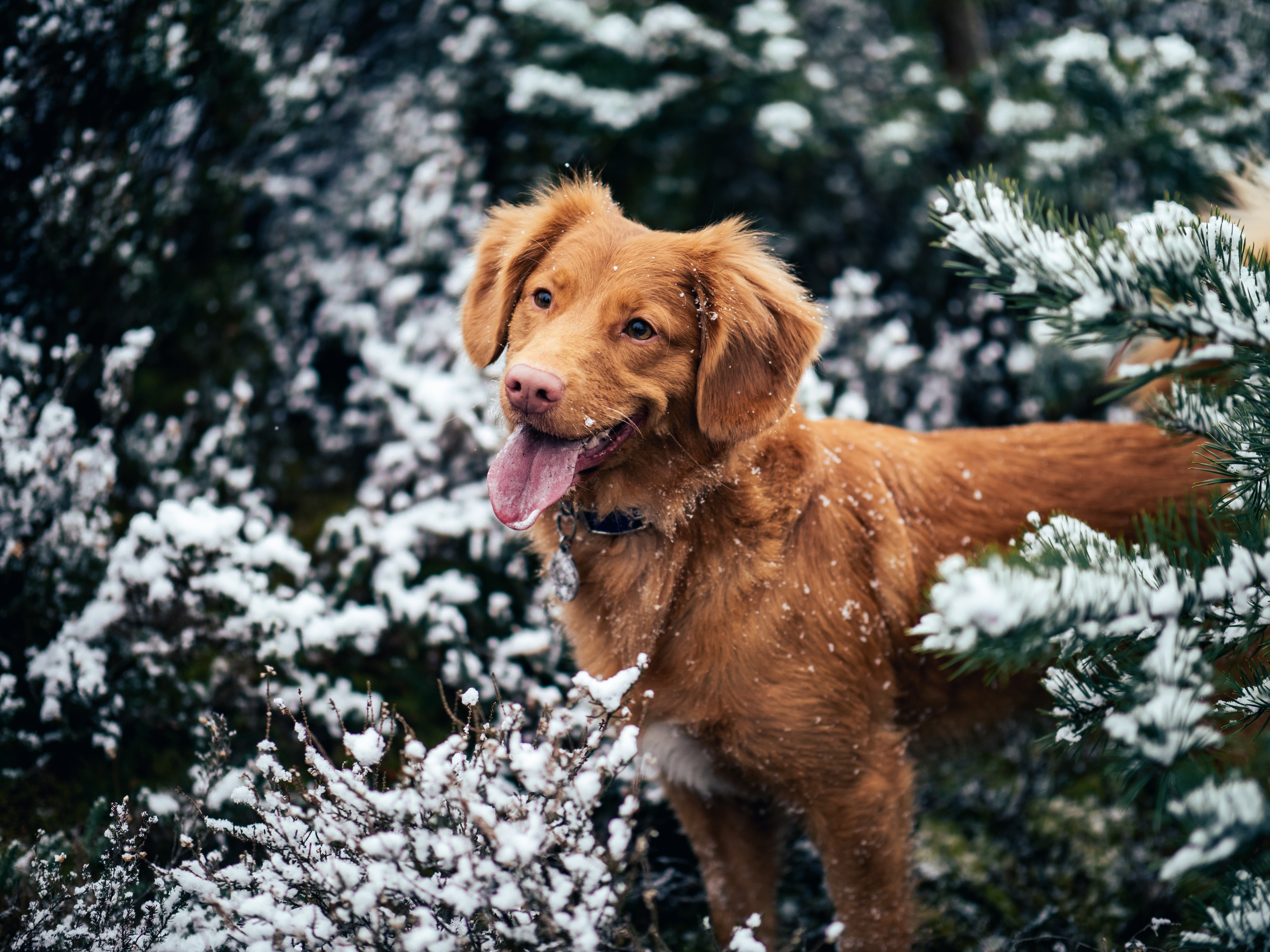 dog surrounded by snow-covered trees