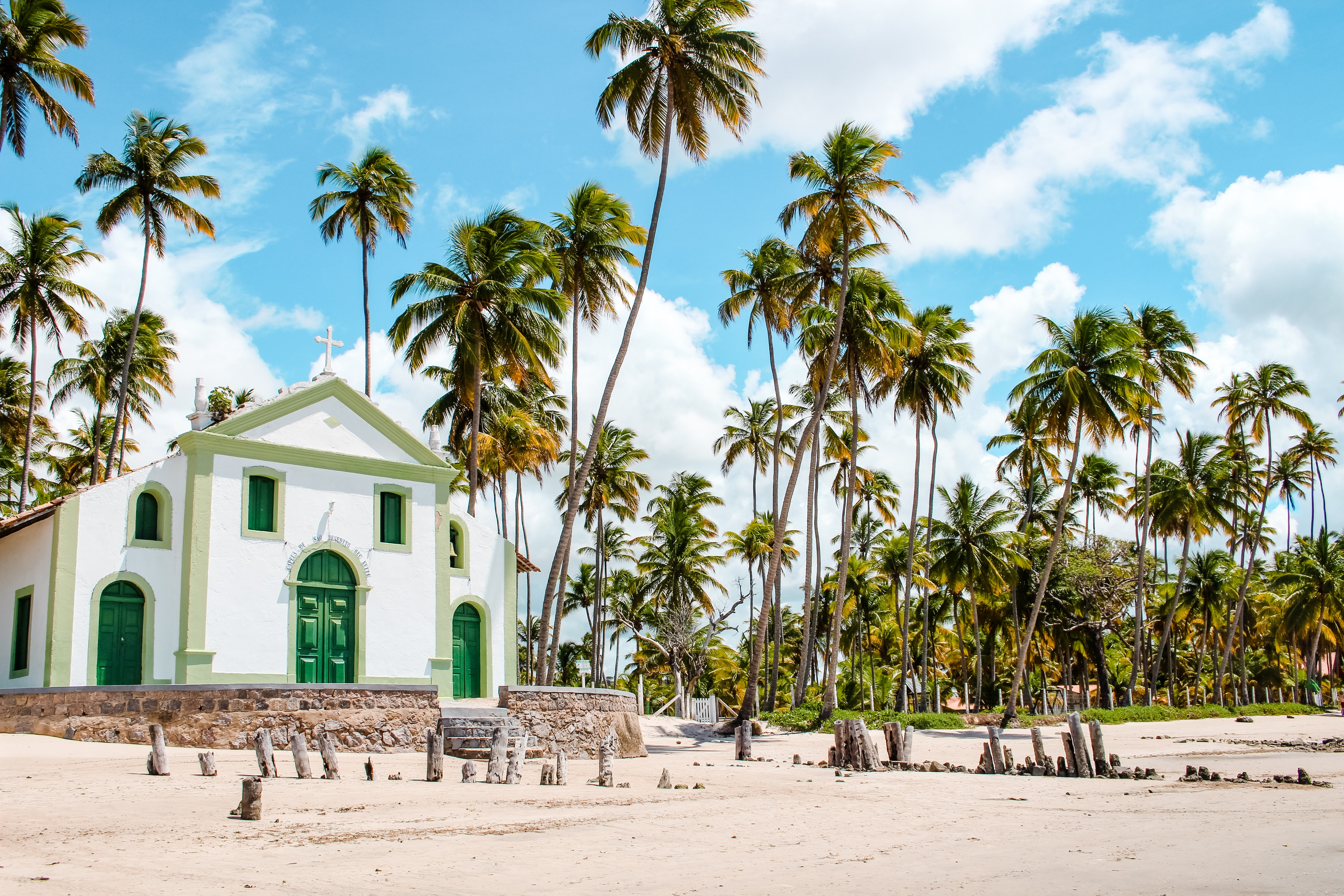 coconut palm trees near white painted house