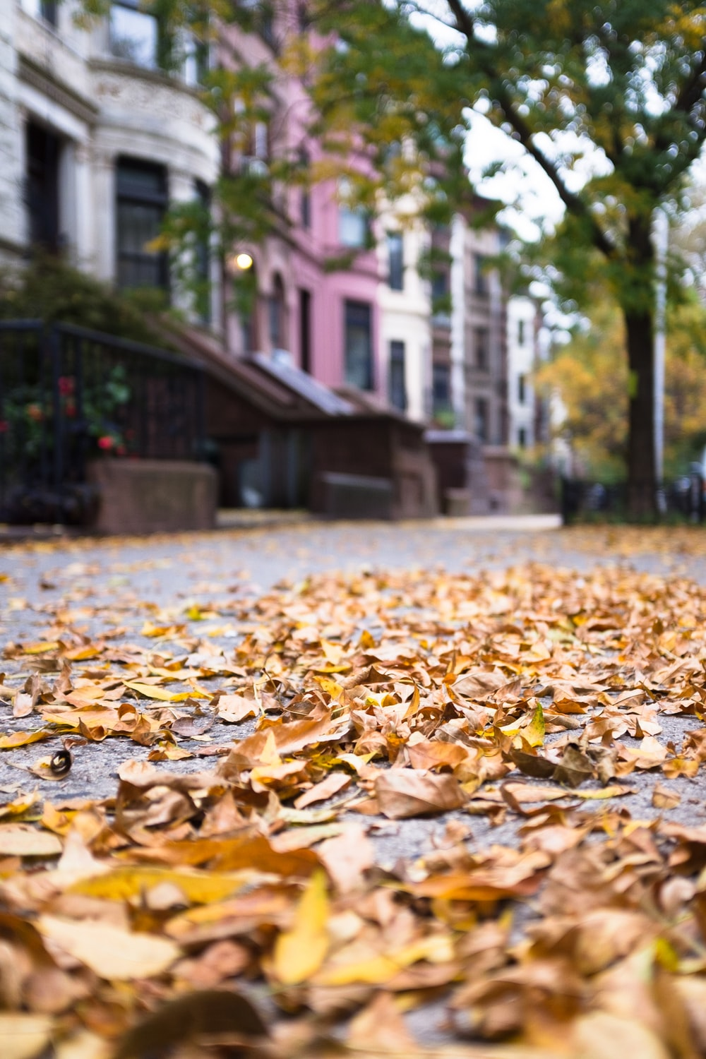 shallow focus photography of dried leaves on pavement