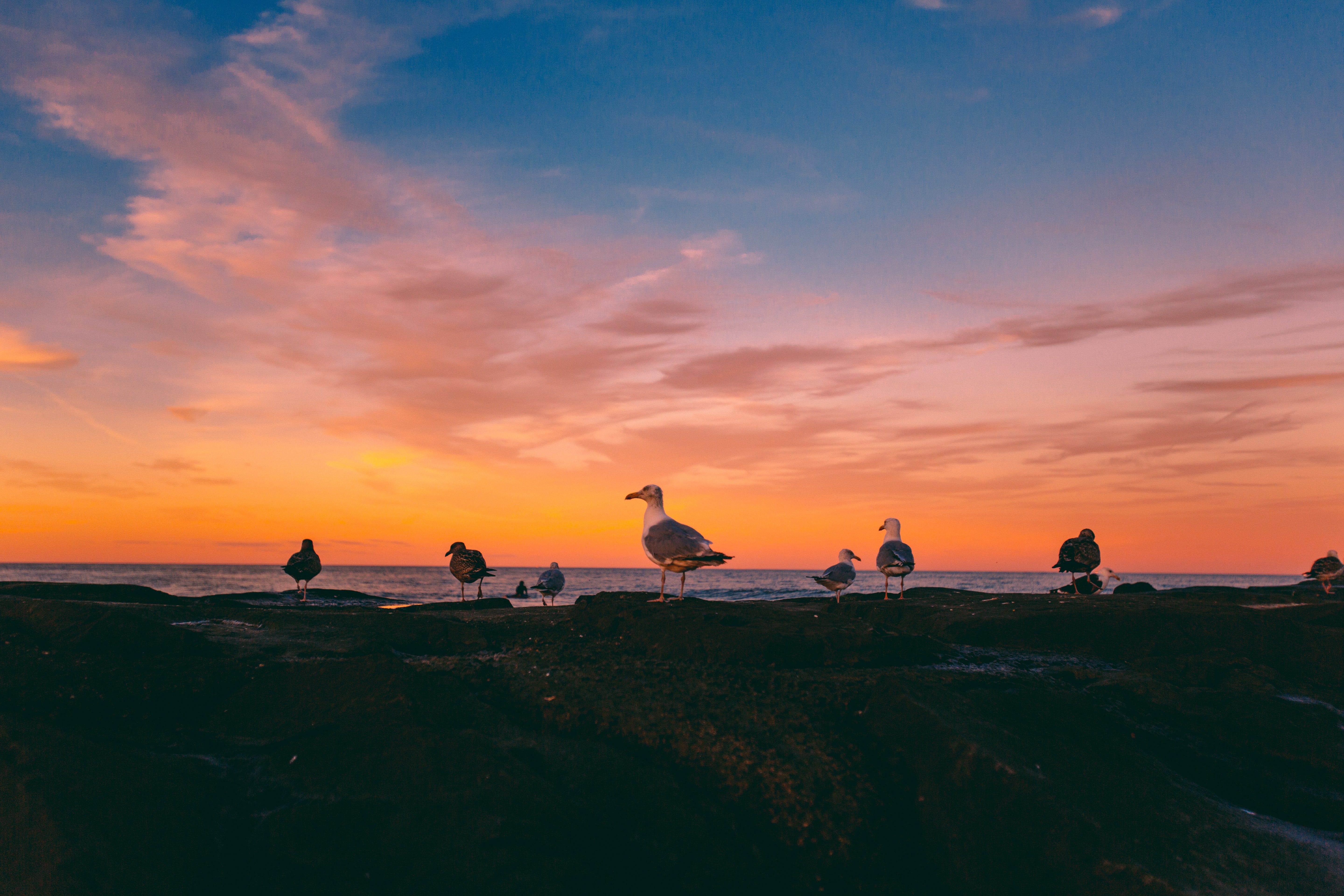 flock of seagull during golden hour