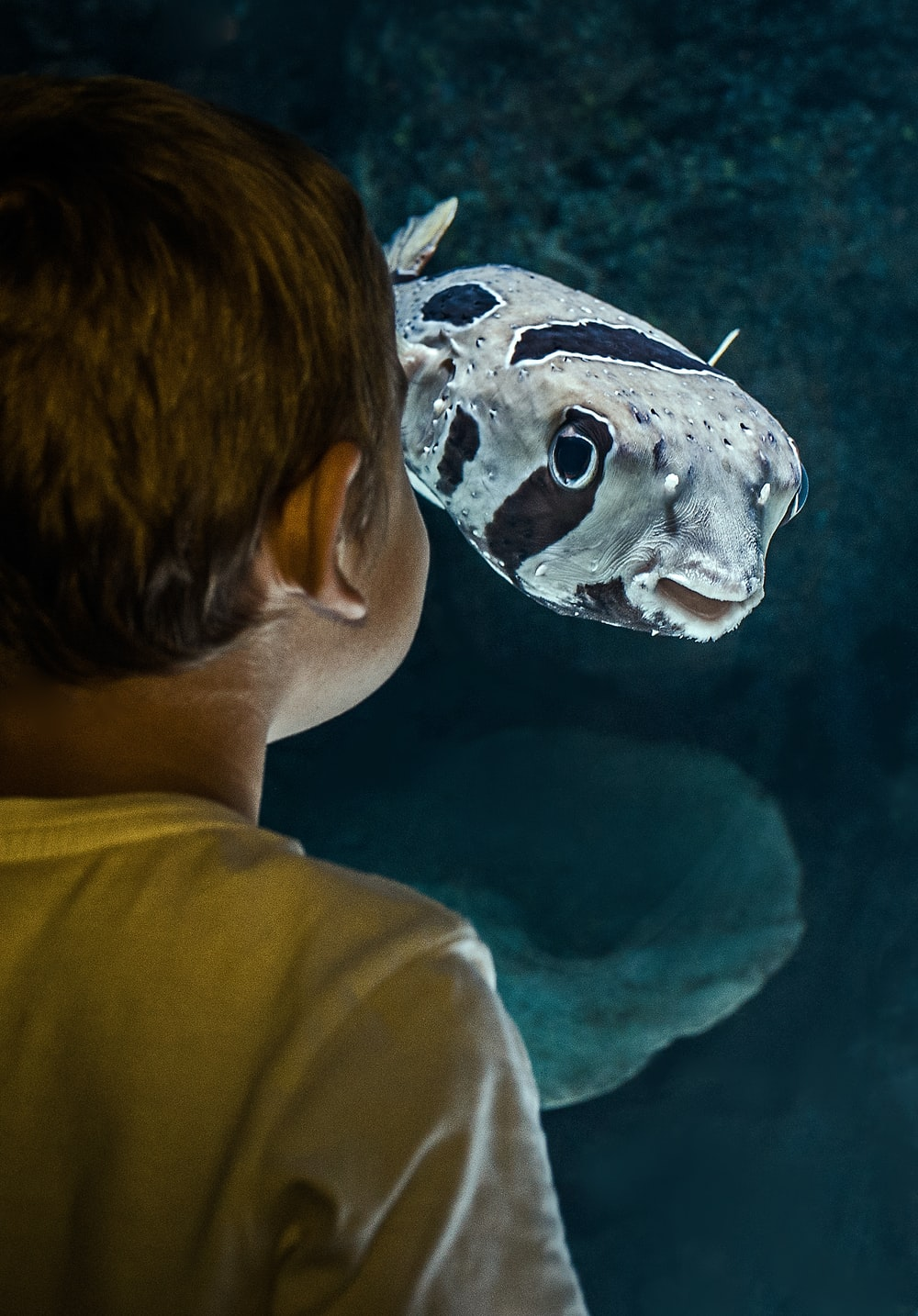 boy standing beside fish inside room