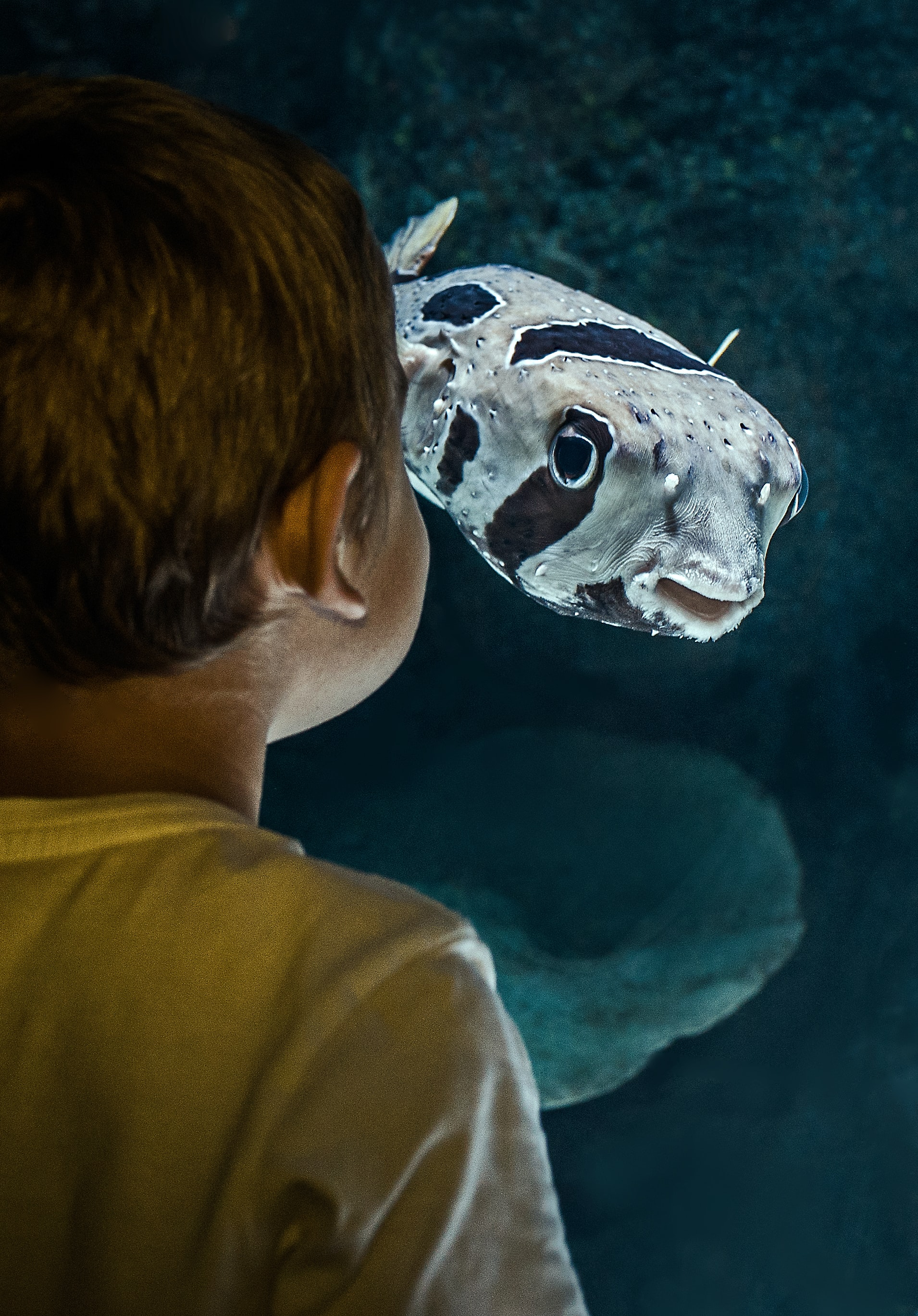 boy standing beside fish inside room