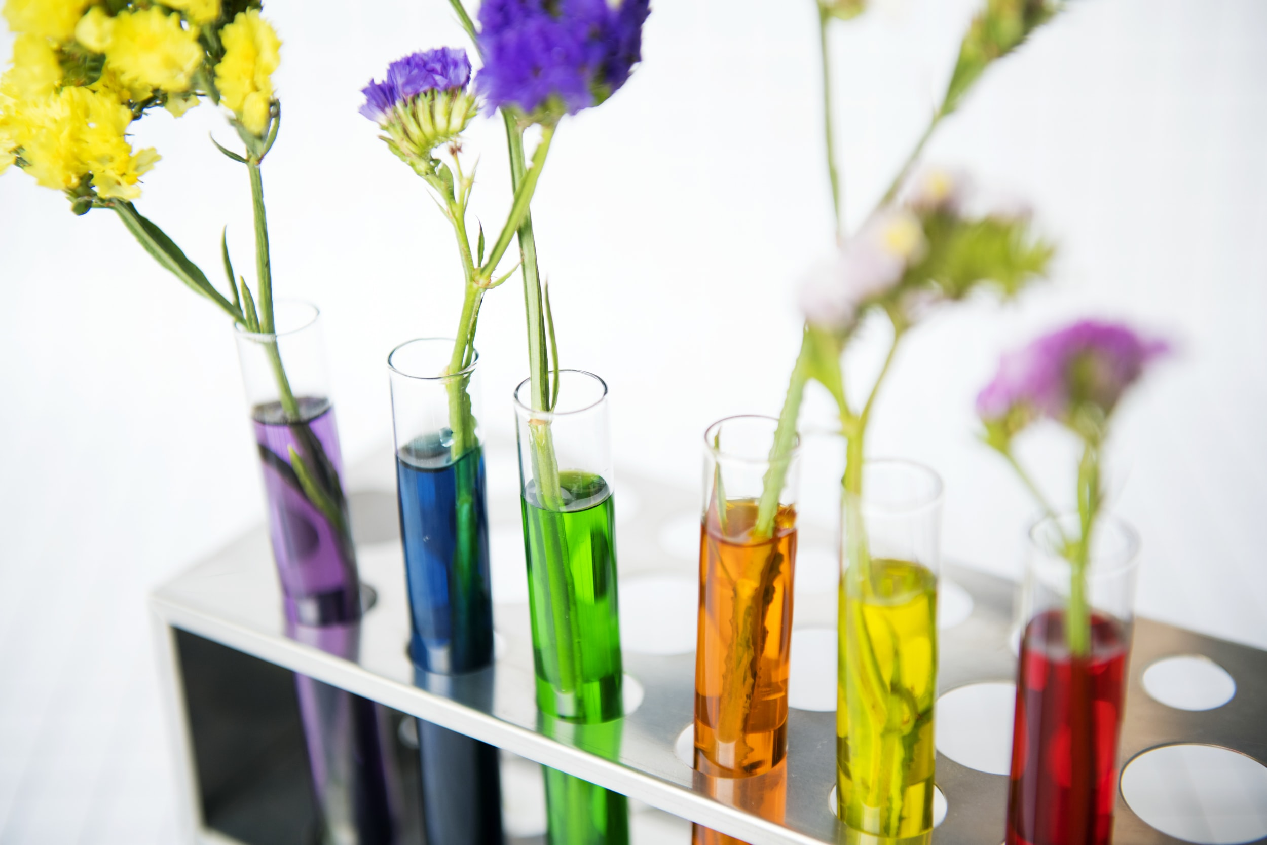 assorted-color flowers in tubes