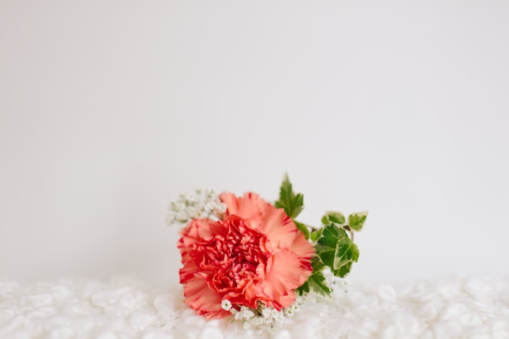 red petaled flower on white textile