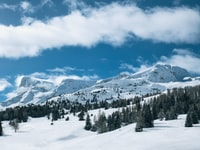 snow covered mountain and pine trees