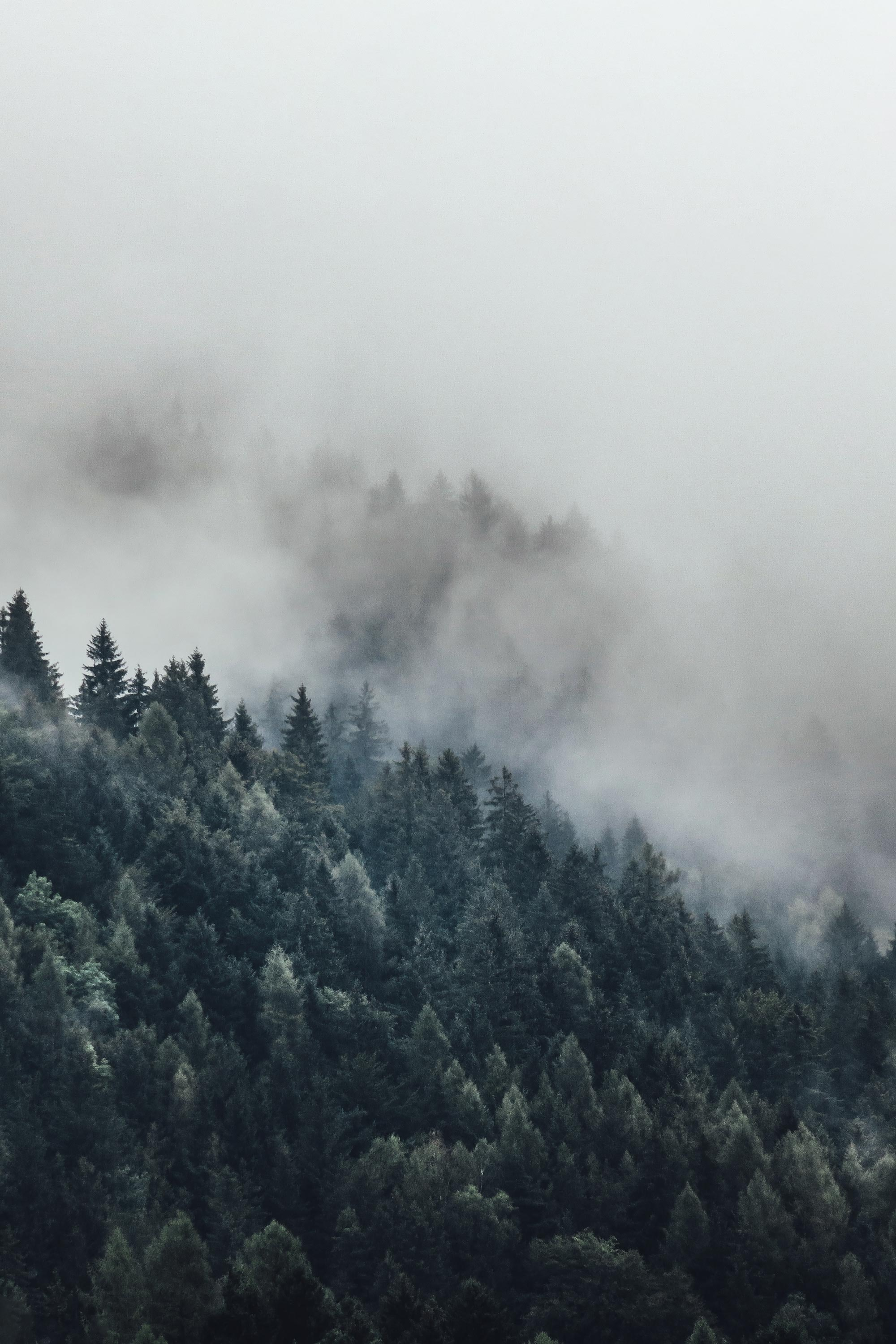 bird's eye photography of tall trees surrounded with fogs