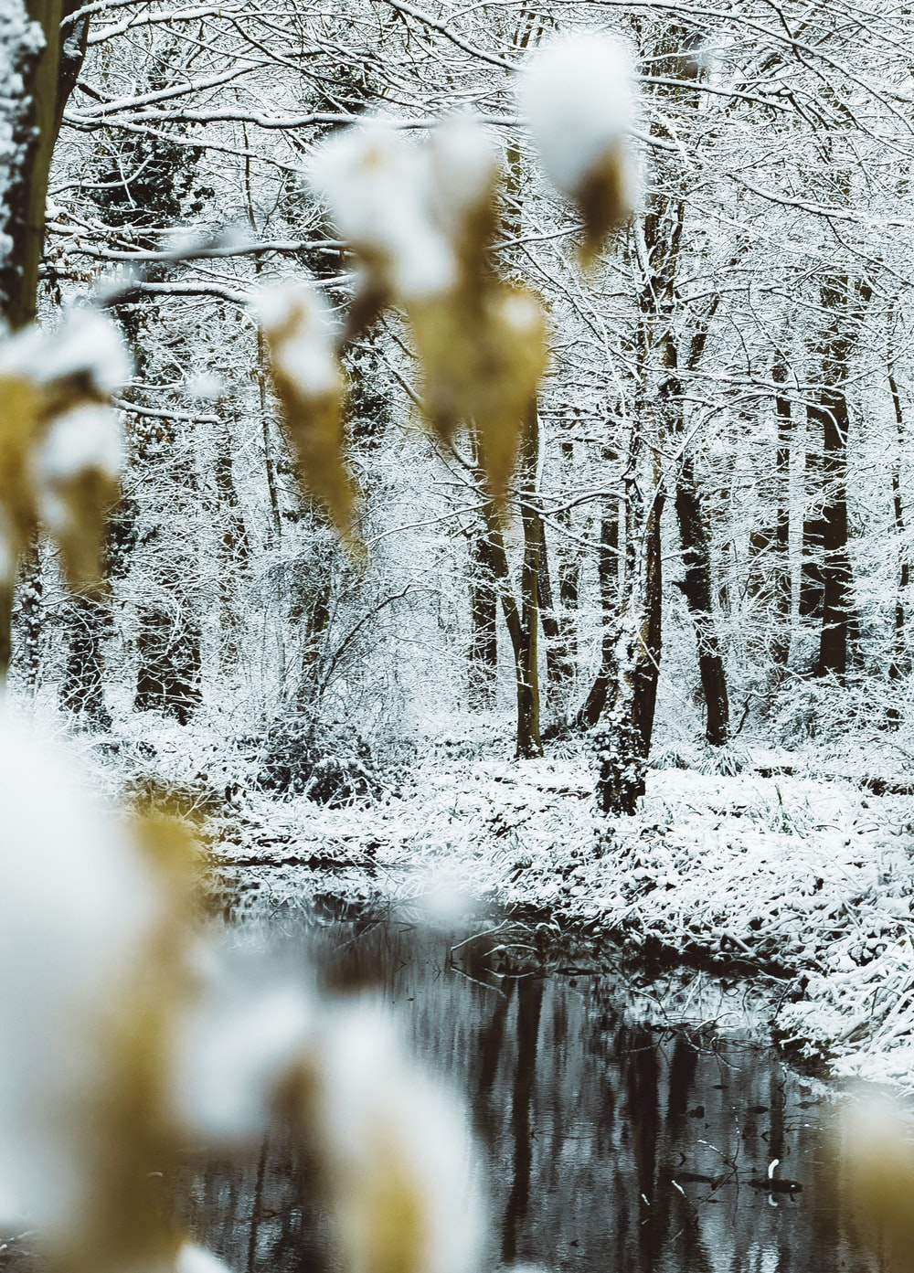 landscape photography of trees in snow