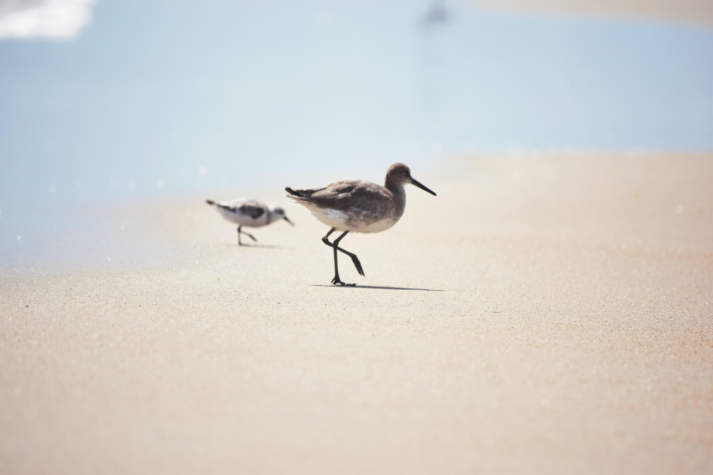 two birds walking on ground