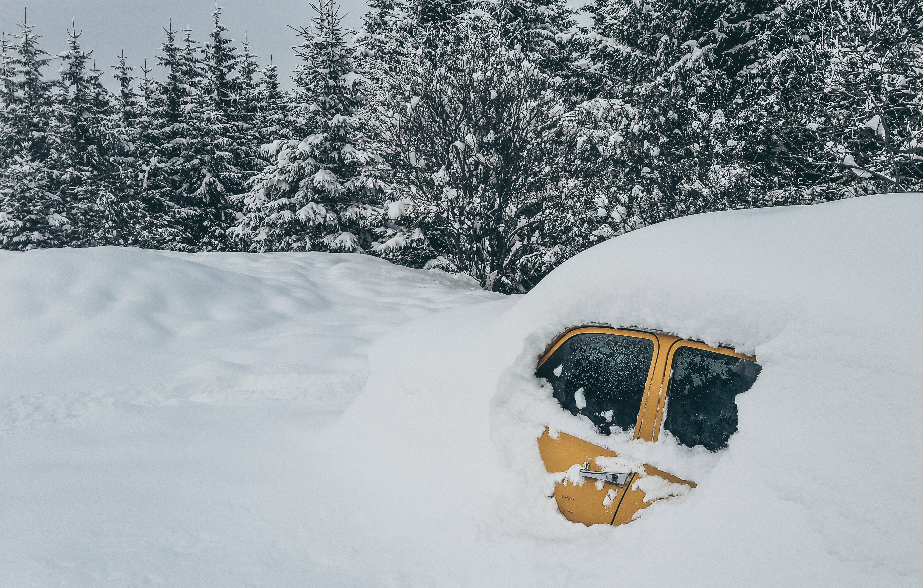 photo of brown vehicle covered with snow near pine tree forest