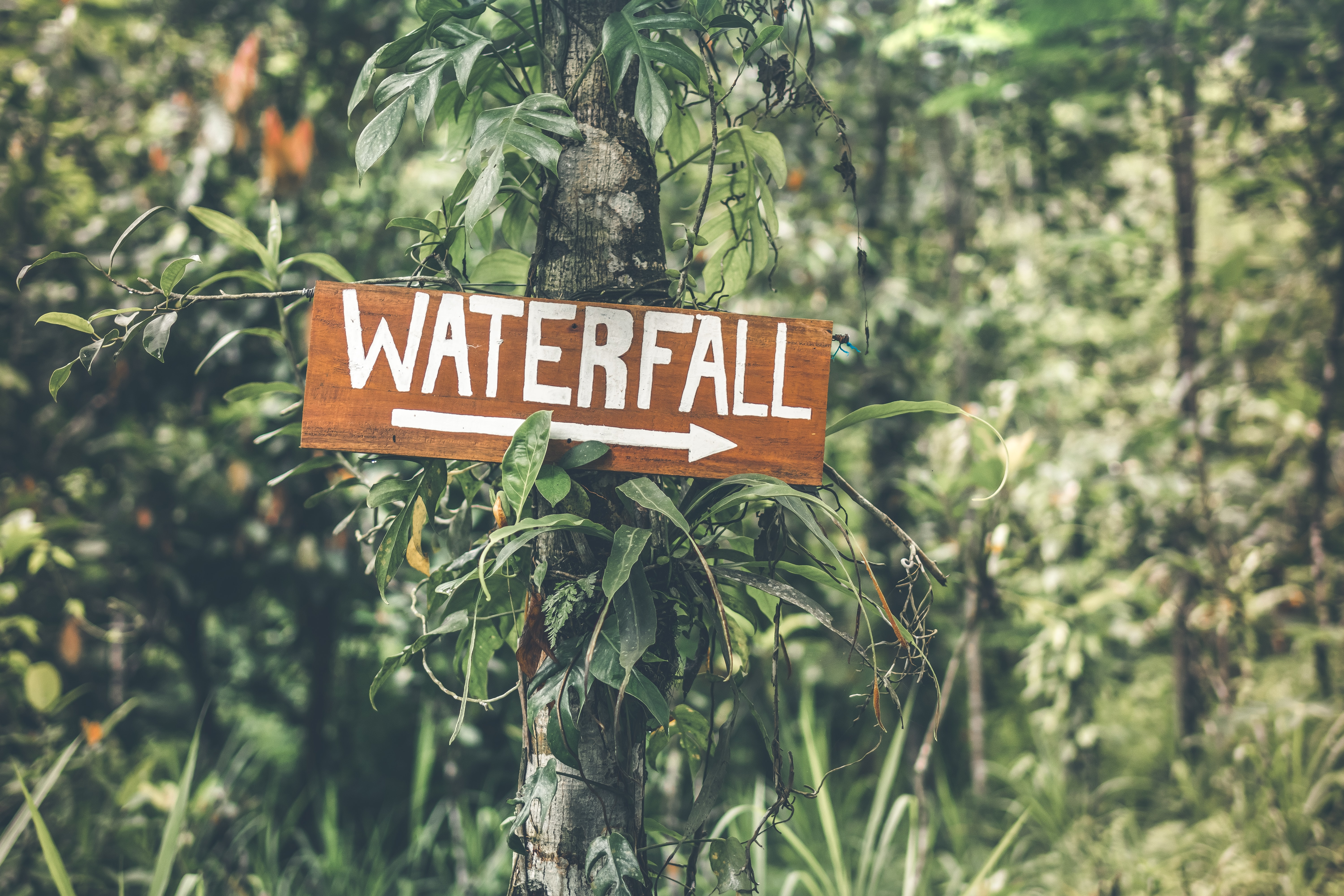 selective focus photography of Waterfall signboard