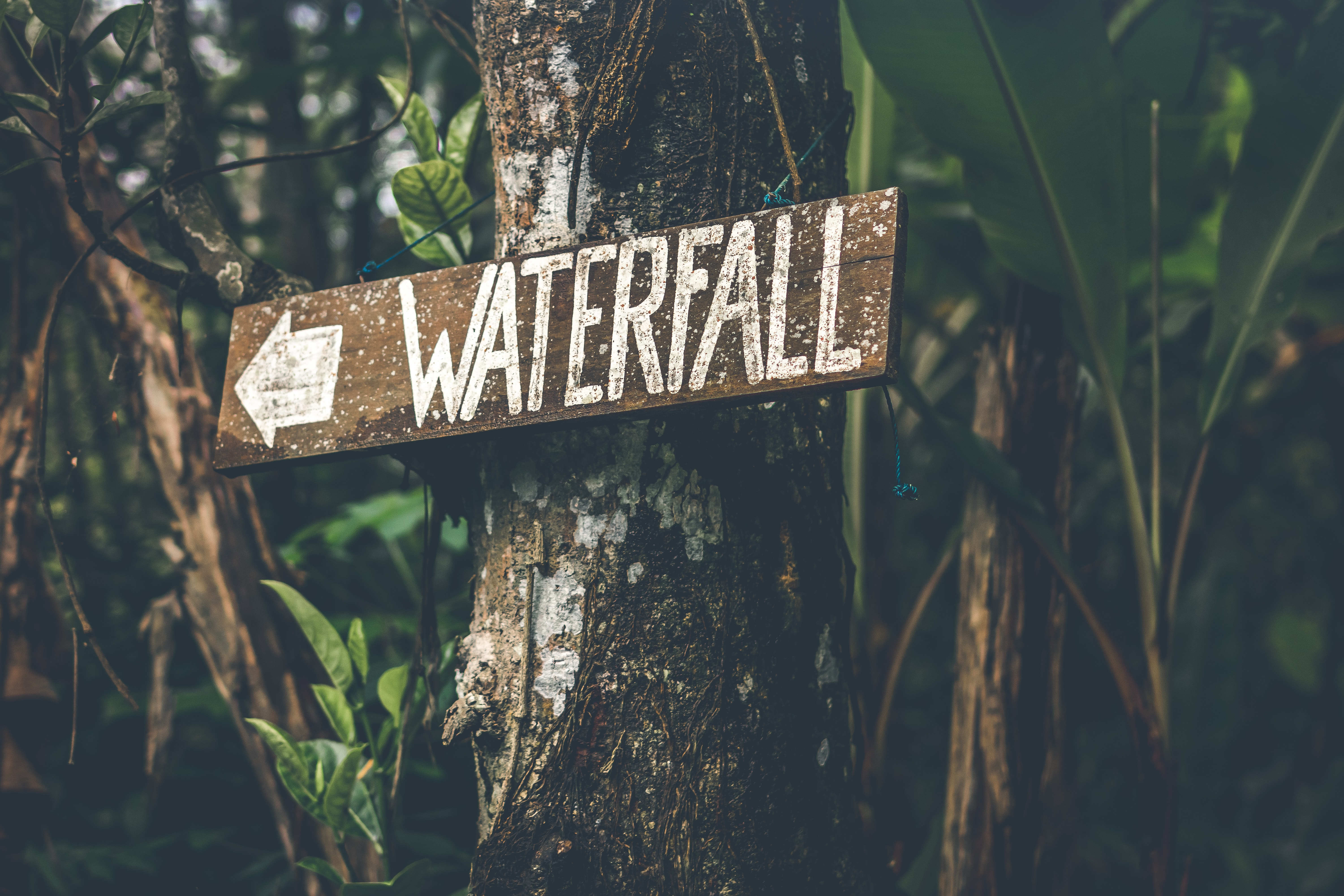 brown and white wooden waterfall sign on brown tree stem